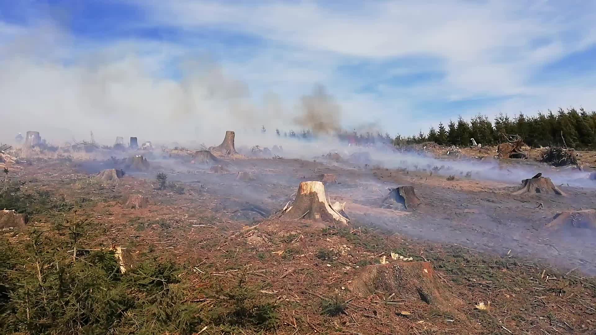 Deset hasičských jednotek likvidovalo požár lesa v Ratiboři